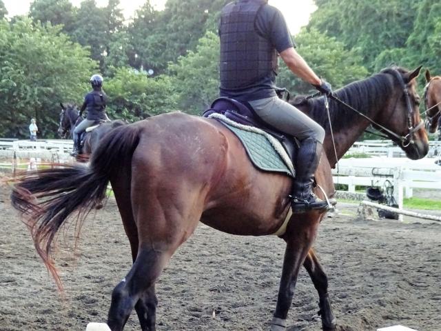 大学馬術部員、馬に頭を蹴られる事故2018/11/23