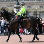バッキンガム宮殿騎馬警官青鹿毛