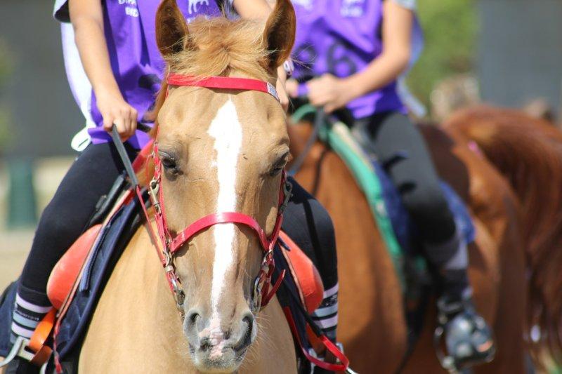 体験乗馬に行ってみよう - 乗馬の第一歩を踏み出すために