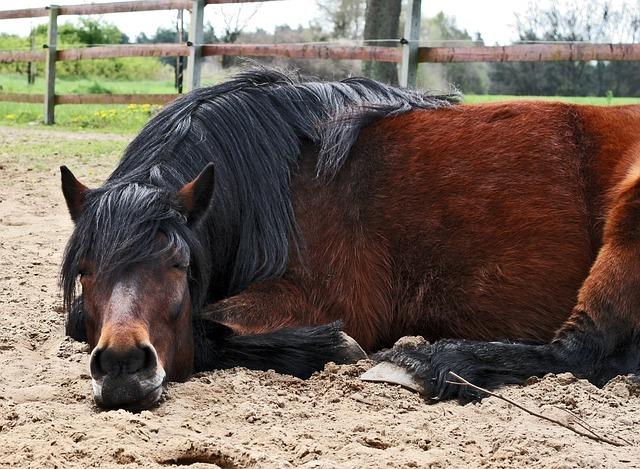 蹄鉄をつけている馬は落雷で危険になる?