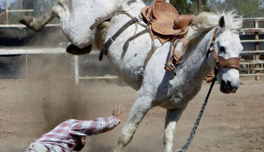 日本で去勢がなかったのは暴れ馬が好まれたからかも