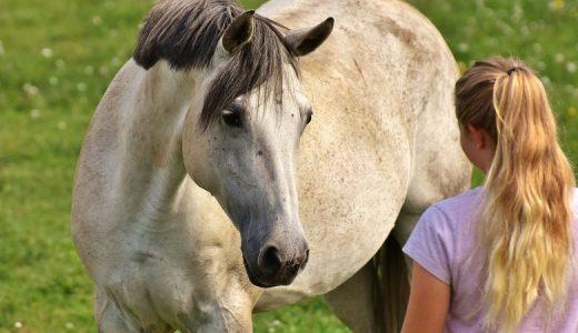 馬は人間の表情を読むことができる - 喜怒によって変わる馬の反応