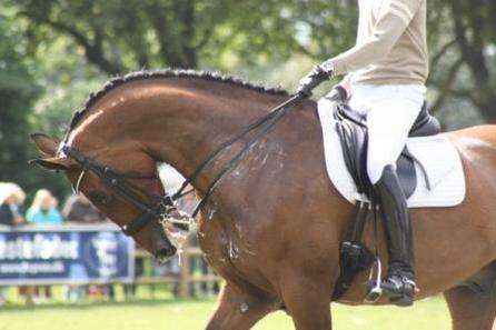 馬の汗 - 発汗で体温調節ができる稀有な性質