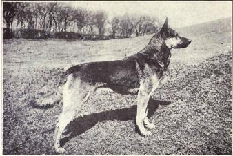 書評『犬が私たちをパートナーに選んだわけ』 現代社会と動物を考える