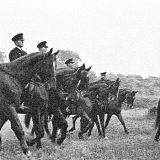 皇宮警察騎馬隊