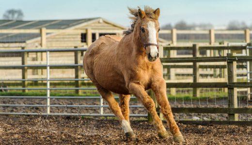馬の寿命と長寿番付 - 馬は何歳まで生きられるのか