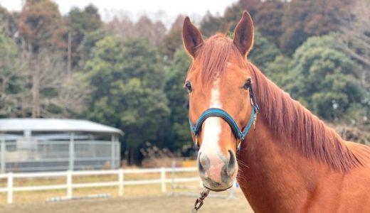 馬はのどくらいの重さの馬車を引っ張れるか