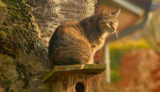 猫の外飼いはヨーロッパでは珍しくない