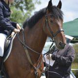 イギリスの騎馬警官隊の馬のトレーニング動画〔うま動画〕