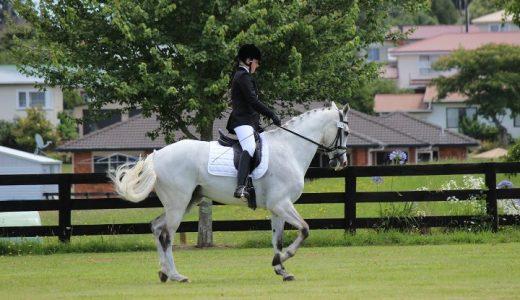 馬場馬術の見方『馬場馬術の紹介』と『オリンピック課目の解説』の紹介