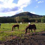 北海道牧場馬