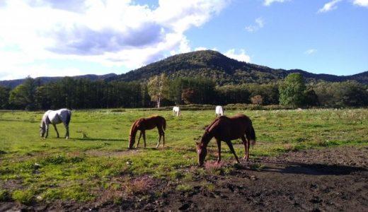 引退競走馬の行方と動物の福祉 感情論は横において考える