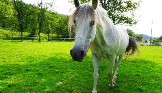 馬のライフスパン 馬齢を人間の一生に当てはめると何歳にあたる?