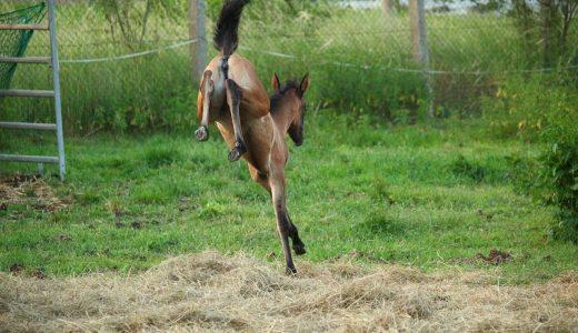 蹴る馬と蹴らない馬