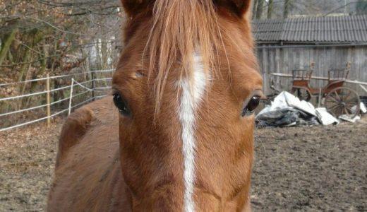 馬の目 馬の視野は350度