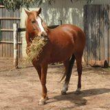 馬のごはん 飼料