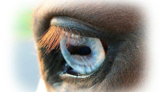 馬の視覚 馬はどのように世界を見ているのか