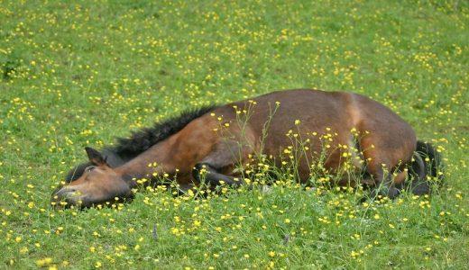 馬の熱中症