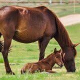 牝馬と仔馬
