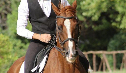 乗馬と体重制限 科学的根拠に基づく体重上限