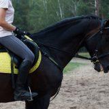 はじめての乗馬クラブ 乗馬体験ビデオ集