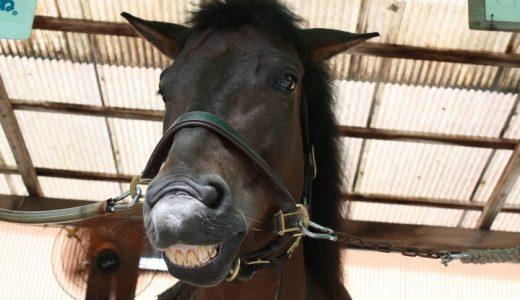 いななきで分かる馬の感情