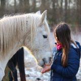 引退馬支援Q&A