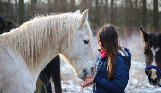 引退馬支援Q&A 支援する意義と必要とされる背景