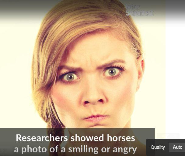 馬は人間の表情を記憶する