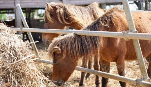 宮古馬の不適切な飼育による虐待問題・報道まとめ