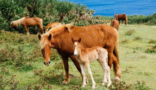 日本在来馬、馬種別飼養頭数の推移【馬統計】