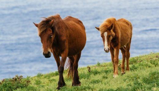 与那国馬 沖縄の日本在来馬〔馬の品種〕