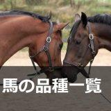 馬の品種一覧