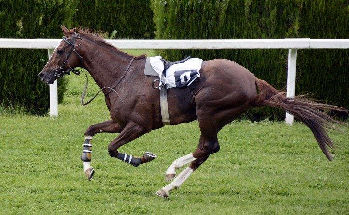 放馬、空馬
