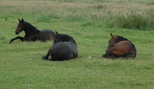 気温と湿度と馬の冷却効率 馬の熱中症予防指標