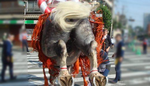 藤崎八旛宮例大祭、飾り馬の神幸行列は2019年は9月16日