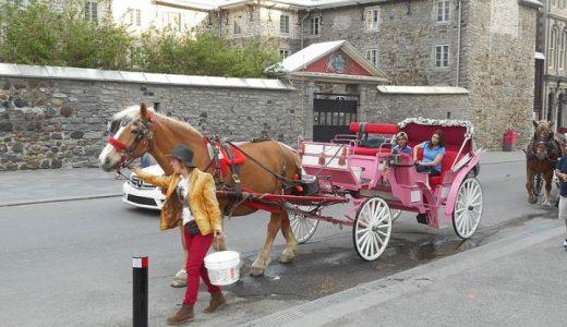 都市部の観光馬車は廃止されゆくのか
