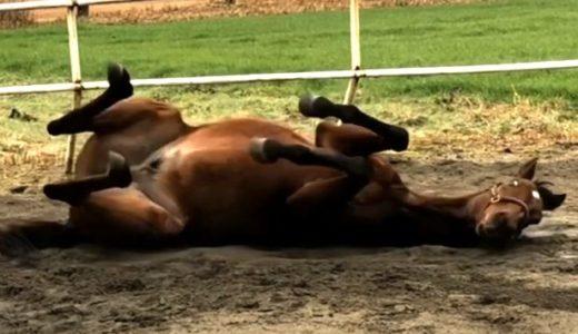 馬が走っている時に聞こえる音、「ブホッブホッブホッ」正体は…