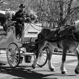 ニューヨークの馬車セントラルパーク