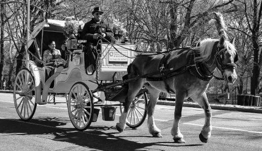 馬車馬のように働く?ニューヨークの馬車馬の労働条件から考える