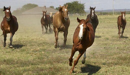 馬は死ぬまで走るのか