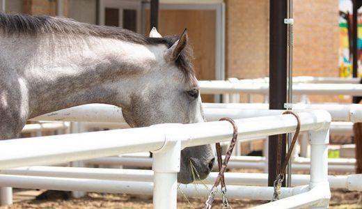 費用を抑えて子どもに乗馬させるなら JRA「乗馬スポーツ少年団」がおすすめ