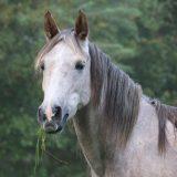 個人が引退馬を引き取るときの不安、そして環境改善の課題