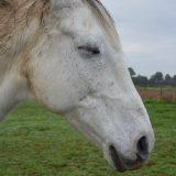 睡眠馬寝る馬