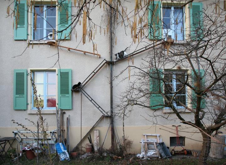 スイスの猫用はしご